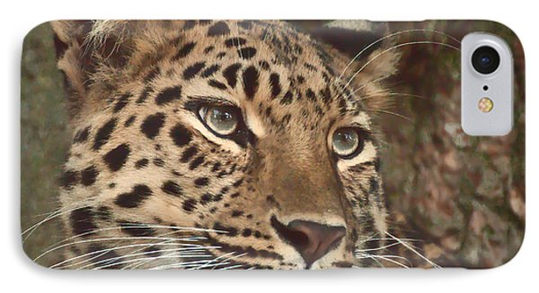 Amur Leopard IPhone Case by Chris Boulton