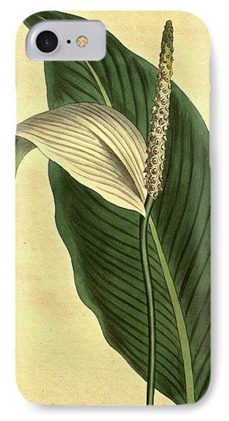 Botanical Print By Sydenham Teast Edwards 1768 – 1819 IPhone Case