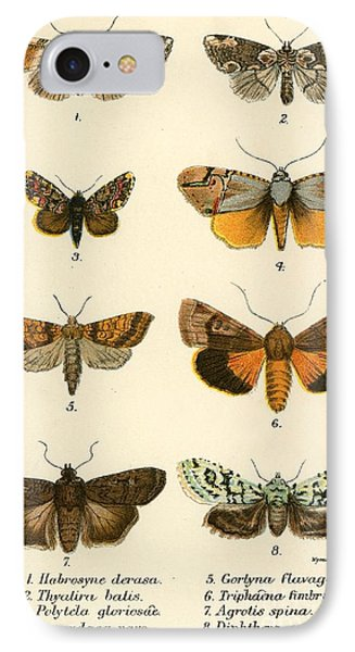 Butterflies IPhone 7 Case by English School