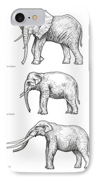 Elephant Evolution, Artwork IPhone Case by Gary Hincks