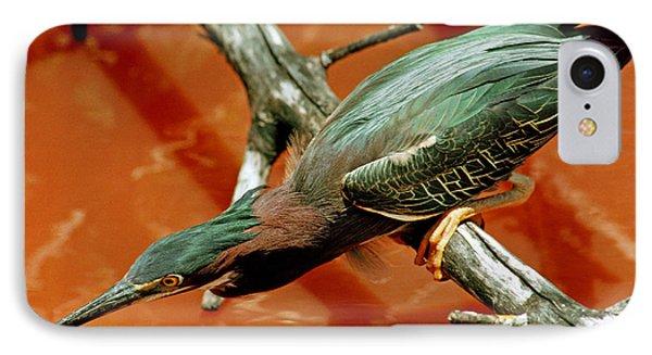 Green Back Heron IPhone Case