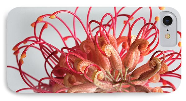 Grevillea Flower IPhone Case by Shirley Mitchell