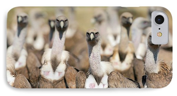 Griffon Vultures IPhone Case by Nicolas Reusens