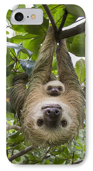 Hoffmanns Two-toed Sloth And Old Baby IPhone Case by Suzi Eszterhas