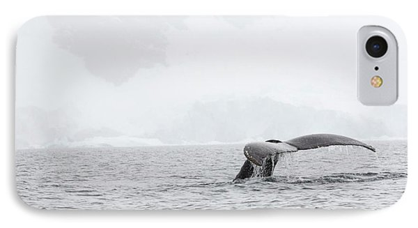 Humpback Whales Feeding On Krill IPhone Case by Ashley Cooper