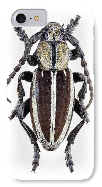 Longhorn Beetle IPhone Case