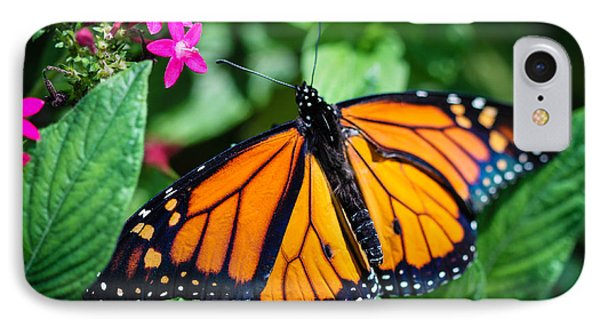 Monarch Danaus Plexippus IPhone Case by Henrik Lehnerer