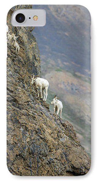 Mountain Goats Along Kongakut River IPhone Case by Tom Norring