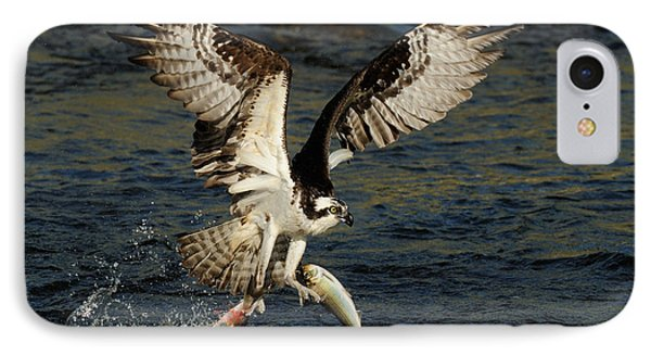 Osprey Catching Trout IPhone Case