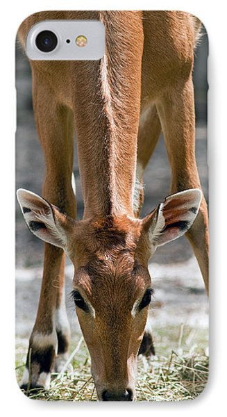Persian Gazelle IPhone Case