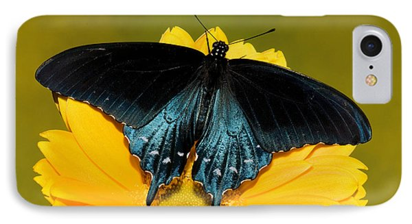 Pipevine Swallowtail Butterfly Phone Case by Millard H. Sharp