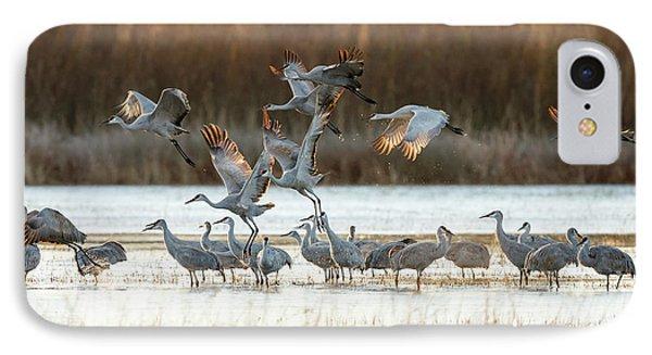 Sandhill Cranes Flying, Grus IPhone Case by Maresa Pryor
