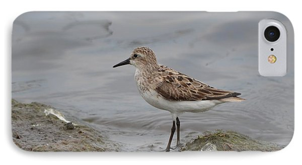 IPhone Case featuring the photograph Semipalmated Sandpiper by James Petersen