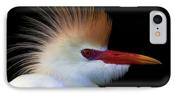 Usa, Florida, St IPhone Case by Jaynes Gallery