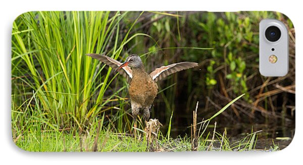 Virginia Rail Rallus Limicola Phone Case by Linda Freshwaters Arndt