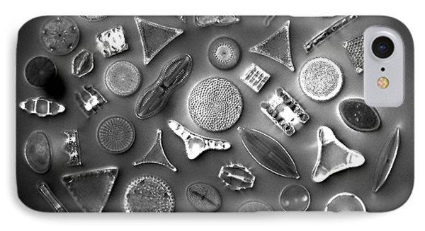 50 Diatom Species Arranged  Phone Case by Science Source