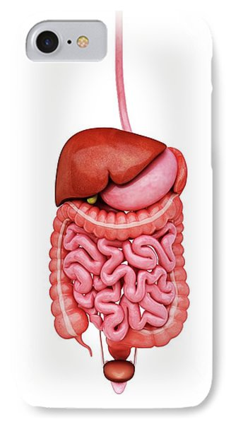 Human Digestive System IPhone Case by Pixologicstudio