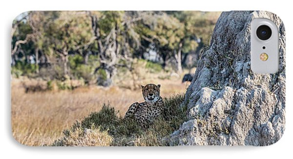 Cheetah Acinonyx Jubatus Resting IPhone Case by Panoramic Images
