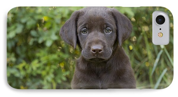 Chocolate Labrador Retriever Puppy IPhone Case by Linda Freshwaters Arndt