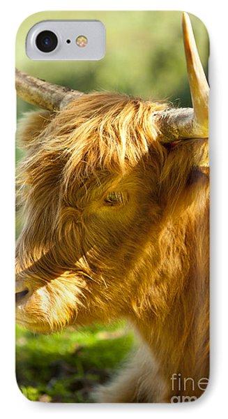 Highland Cow Phone Case by Brian Jannsen