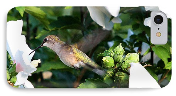 Hummingbird IPhone Case by John Freidenberg