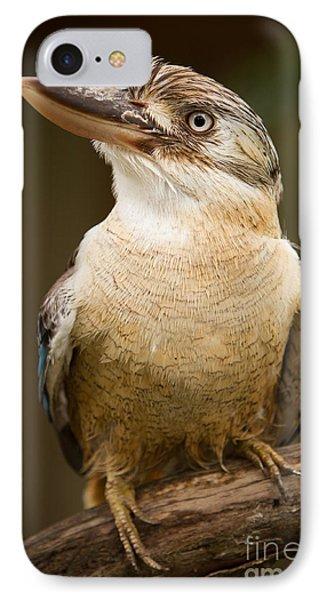 Kookaburra IPhone Case by Craig Dingle