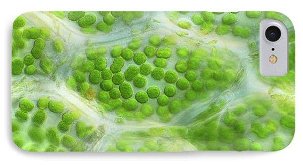 Moss Leaf IPhone Case by John Durham
