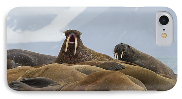 Norway, Svalbard, Prins Karls Forland IPhone Case by Jaynes Gallery
