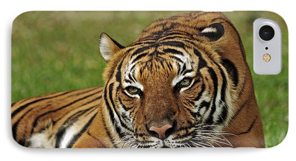 Royal Bengal Tiger IPhone Case