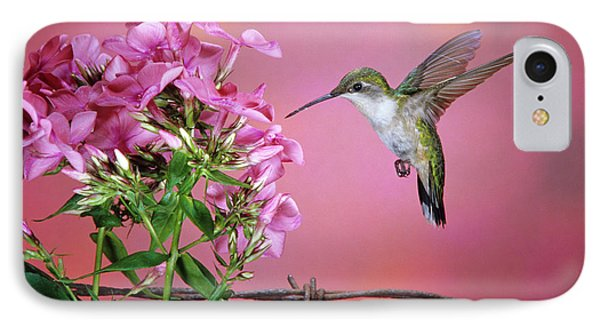 Ruby-throated Hummingbird (archilochus IPhone Case