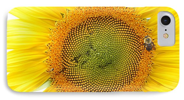 Sunflower IPhone Case by Dacia Doroff