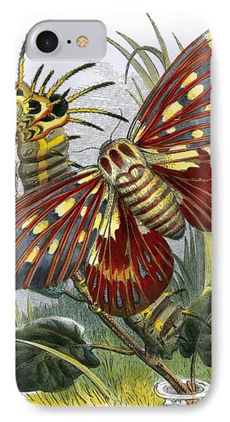 The Butterfly Vivarium IPhone Case by English School