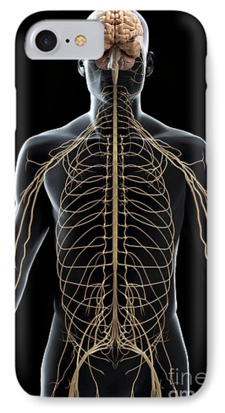 The Nerves Of The Upper Body IPhone Case