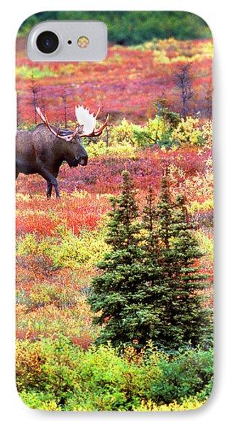 Usa, Alaska, Denali National Park IPhone Case by Jaynes Gallery