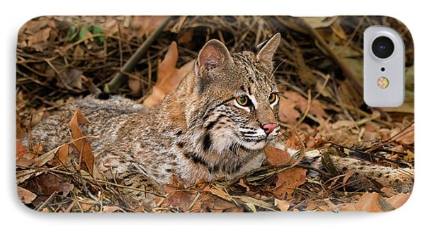 611000006 Bobcat Felis Rufus Wildlife Rescue Phone Case by Dave Welling