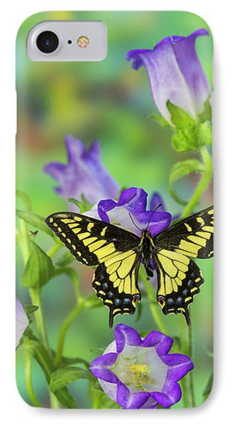 Anise Swallowtail Butterfly, Papilio IPhone Case by Darrell Gulin