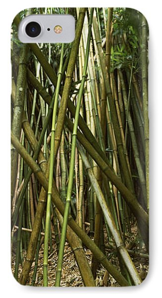 Bamboo Forest, Oheo Gulch, Seven Sacred IPhone Case by Panoramic Images