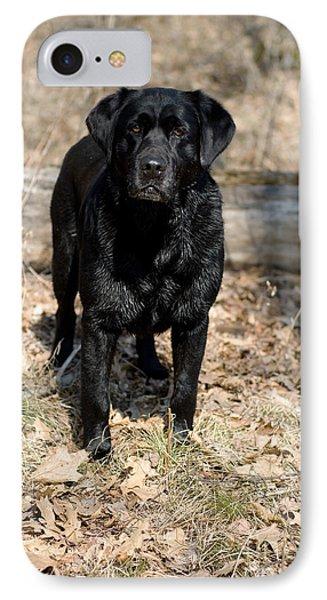 Black Labrador Retriever Phone Case by Linda Freshwaters Arndt