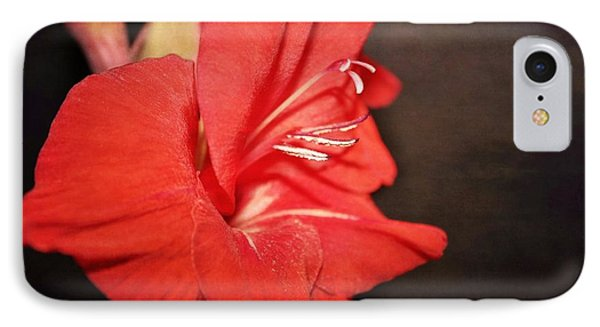 Gladiola  Phone Case by Cathie Tyler