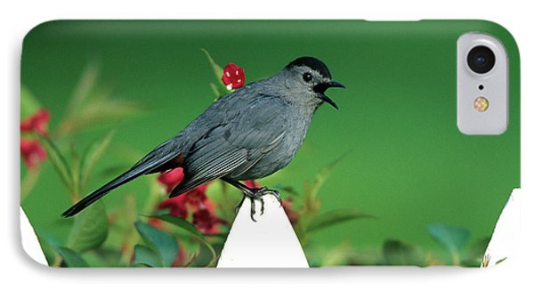 Gray Catbird (dumetella Carolinensis IPhone Case by Richard and Susan Day