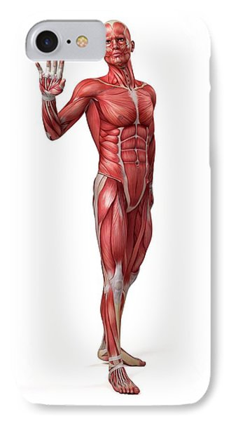 Male Muscular System IPhone Case by Sebastian Kaulitzki
