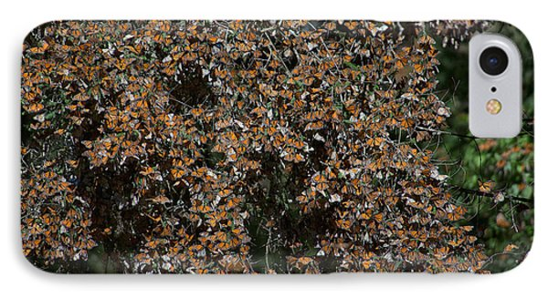 Monarch Butterflies IPhone Case by Carol Ailles