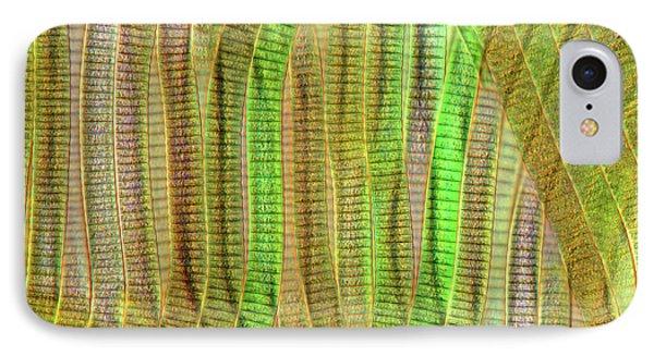 Oscillatoria Cyanobacteria IPhone Case