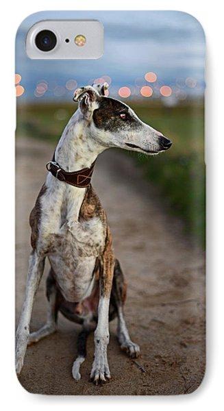 Spanish Greyhound IPhone Case by Nano Calvo