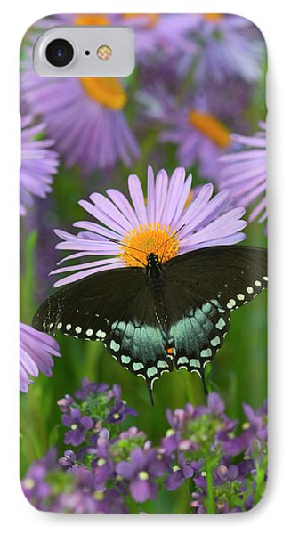 Spicebush Swallowtail, Papilio Troilus IPhone Case by Darrell Gulin