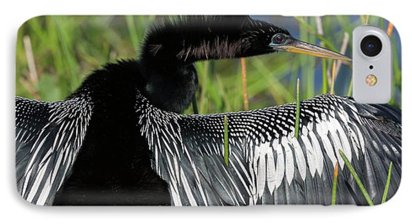 Usa, Florida, Everglades National Park IPhone Case by Jaynes Gallery