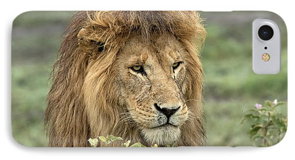 Lion iPhone 7 Case - Africa, Tanzania, Serengeti by Charles Sleicher