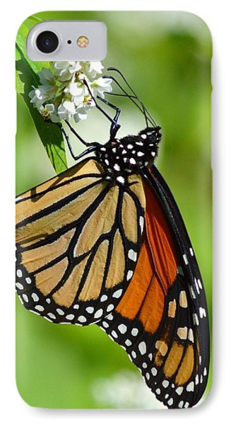 Butterfly IPhone Case by Dacia Doroff