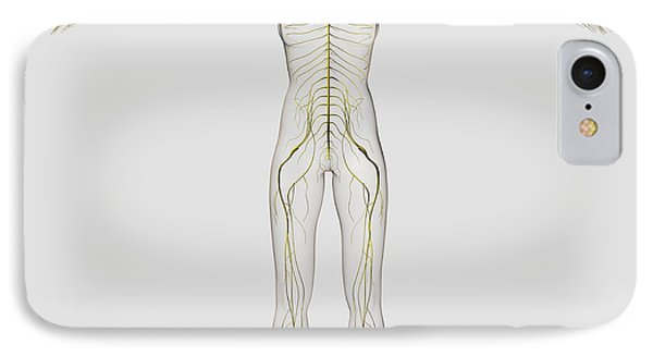 Medical Illustration Of The Human Phone Case by Stocktrek Images