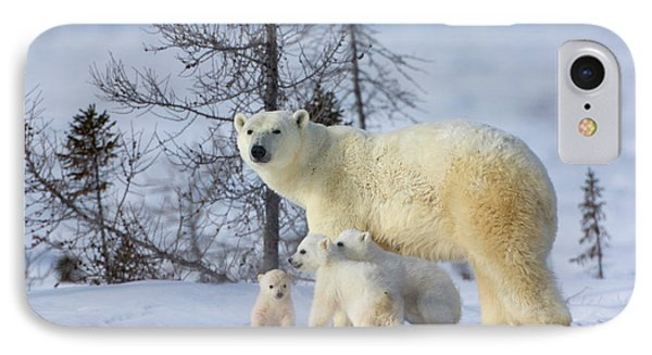 Mother Polar Bear With Three Cubs IPhone Case